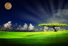Alone lighting tree Royalty Free Stock Images