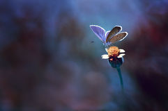 Alone little butterfly. A little butterfly enjoy on the flower Royalty Free Stock Photo