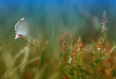 Alone little butterfly. A little butterfly enjoy on the flower Royalty Free Stock Photography