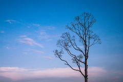 Alone or lonely dry tree in twilight time of winter seasonal. royalty free stock photos