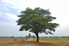 Alone and lonely tree. Royalty Free Stock Photos