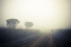 Alone man walking in the fog stock photography