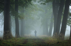 Alone. Man walking alone in a lane on a foggy, autumn morning. Shallow D.O.F Royalty Free Stock Images