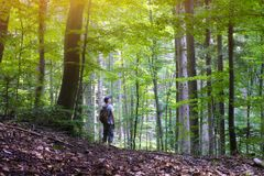Alone man in wild forest. Travel and adventure concept. Mountains landscape photography stock images