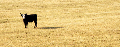 Alone on the meadow in autumn Royalty Free Stock Images