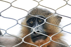 Alone monkey Royalty Free Stock Photography