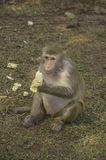 Alone monkey Stock Photos