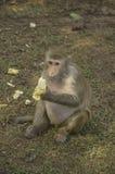 Alone monkey Stock Photos