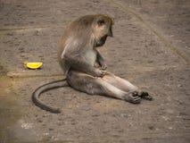 Alone Monkey sitting, thinking on flagstones in Ubud Forest, Bali, Indonesia stock photo