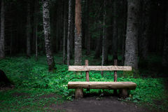 Alone old wooden bench near green forest Stock Images