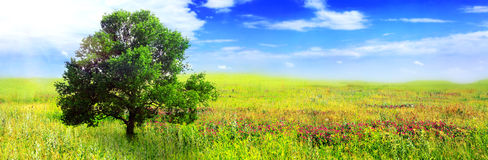 Alone one big tree on green field . Panorama Royalty Free Stock Photos