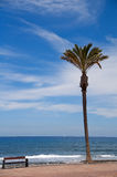 Alone palm tree on the beach. Alone palm tree and beanch on the Atlantic ocean Stock Image