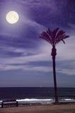 Alone palm tree on the beach Stock Photo
