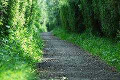 Alone path in forest Stock Photography