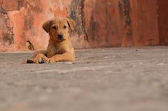 Alone dog Royalty Free Stock Images