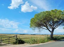 Alone pine. Lovely landscape from Maremma national park Stock Photography