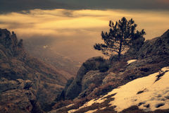 Alone pine tree on the rocks Stock Photography