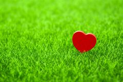 Alone red heart. Shape on grass Stock Image