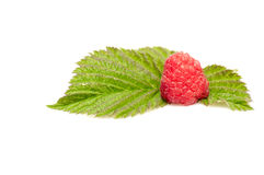 Alone ripe raspberry isolated. Stock Images