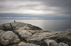 Alone. Sarah sits alone on the bluffs looking towards the Pacific Ocean in North Vancouver, BC, Canada Royalty Free Stock Photo