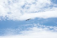 Alone seagull bird flying on cloudy blue sky royalty free stock image
