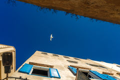 Alone seagull soars in the sky. Royalty Free Stock Photos