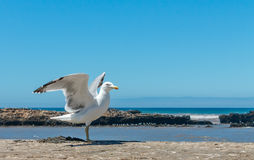 Alone seagull stands wings spread on a wall Stock Image