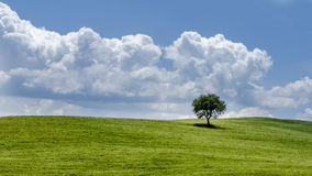 Alone. Single tree on a meadow in Tuscany Stock Images