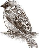 Alone small sparrow Stock Photo