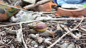 Alone snail life in the city stock video