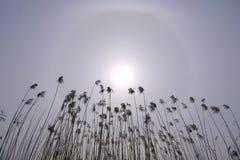 Alone solare Fotografia Stock