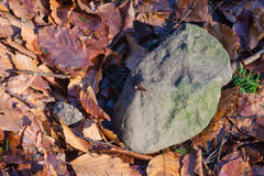 Alone stone. Lying in the leafs Stock Image