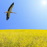 Alone stork fly in clear blue sky Stock Images