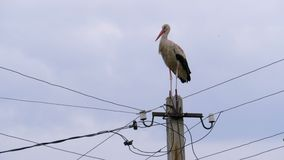 Alone Stork Stands on a Pillar of High Voltage Power Lines on a Sky Background. Stork on a Pole. Summer day stock footage