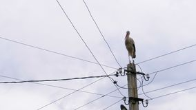 Alone Stork Stands on a Pillar of High Voltage Power Lines on a Sky Background. Stork on a Pole. Summer day stock video footage