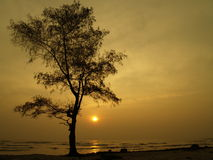 Alone Tree. Tree and the beach, shoot in the morning when sun is rising royalty free stock image