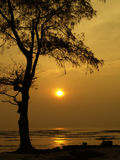 Alone Tree. Tree and the beach, shoot in the morning when sun is rising stock photography