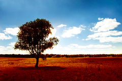 Alone tree. In desert field under beautiful sky and clouds Royalty Free Stock Photo