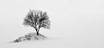 Alone tree. In a meadow in the winter time Royalty Free Stock Photo