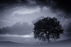 Alone Tree Royalty Free Stock Image