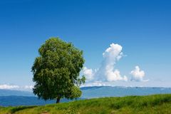 Alone tree Stock Photography