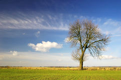 Alone tree. On the blue sky background Stock Image