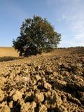 Alone tree Royalty Free Stock Image