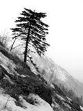 Alone tree stock photography