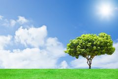Alone  Tree. View of  Tree  and  green grass Royalty Free Stock Photos