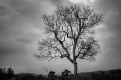 Alone tree. On mountain, cloudy day Royalty Free Stock Photo