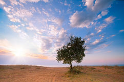Alone tree. Lonely tree on the beach in the background of a beautiful sunrise stock photo