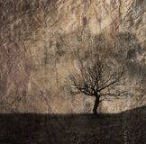 Alone  tree Stock Images