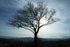 Alone tree. In the blue hills Stock Photos