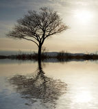 Alone tree. And water reflection Stock Photos